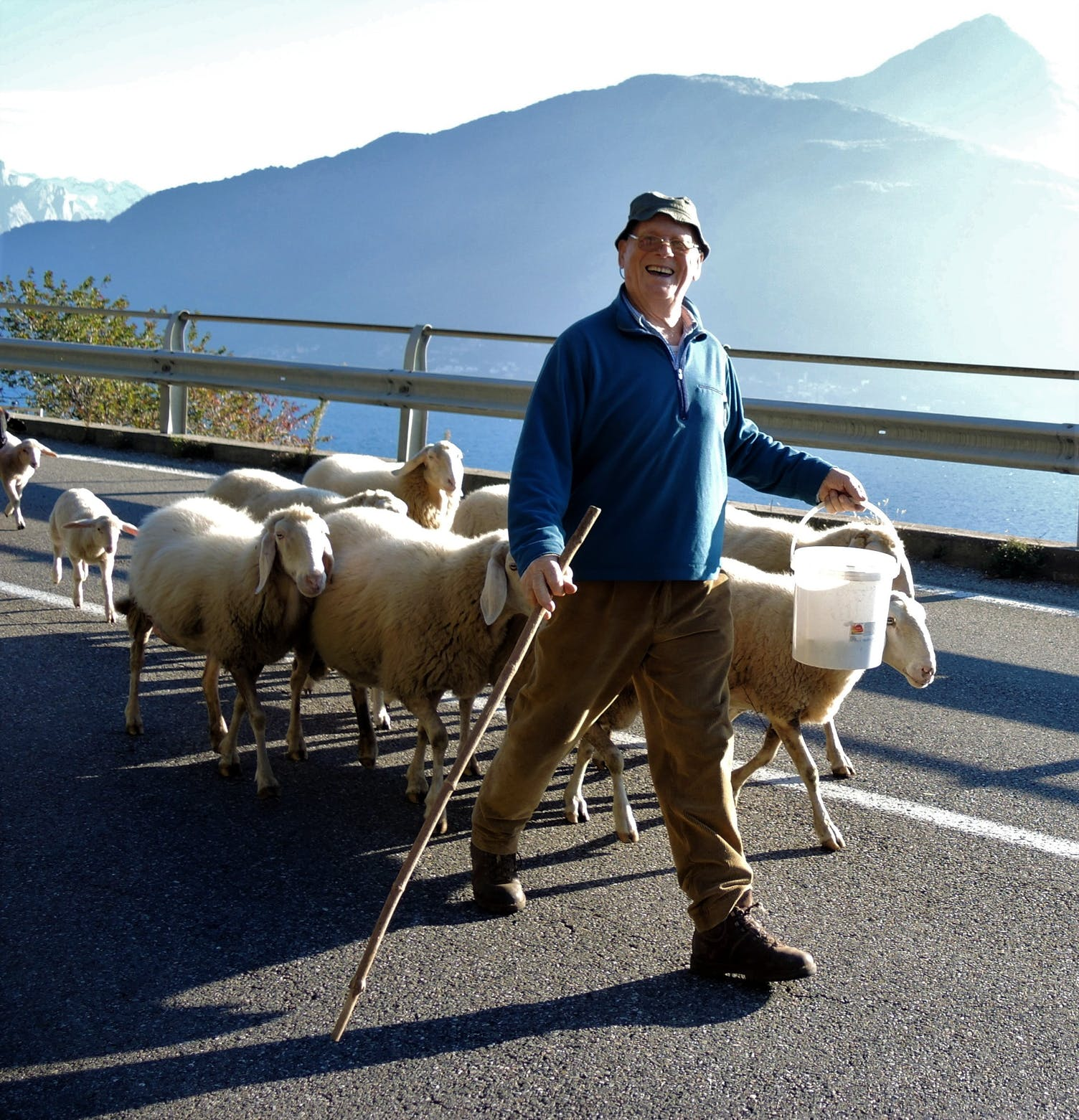 Schafe Hirte