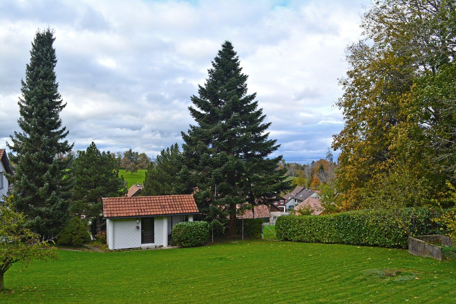 Adventsbaum