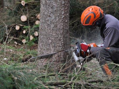 Förster Wald Baum