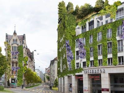 St.Gallen begrünen
